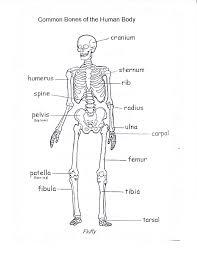 bones-3